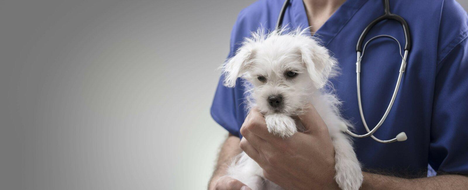 Vétérinaire d'urgence à Bruxelles