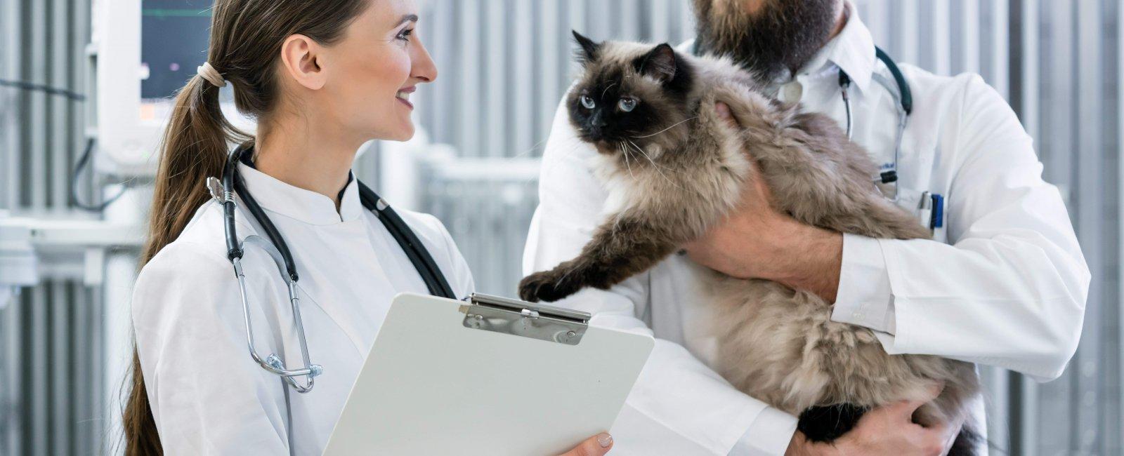 SOS vétérinaire à Bruxelles