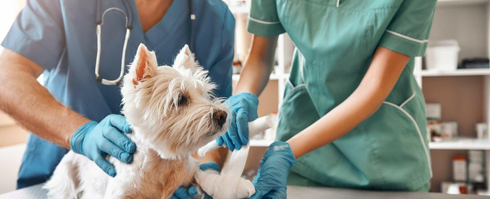 Vétérinaire d'urgence