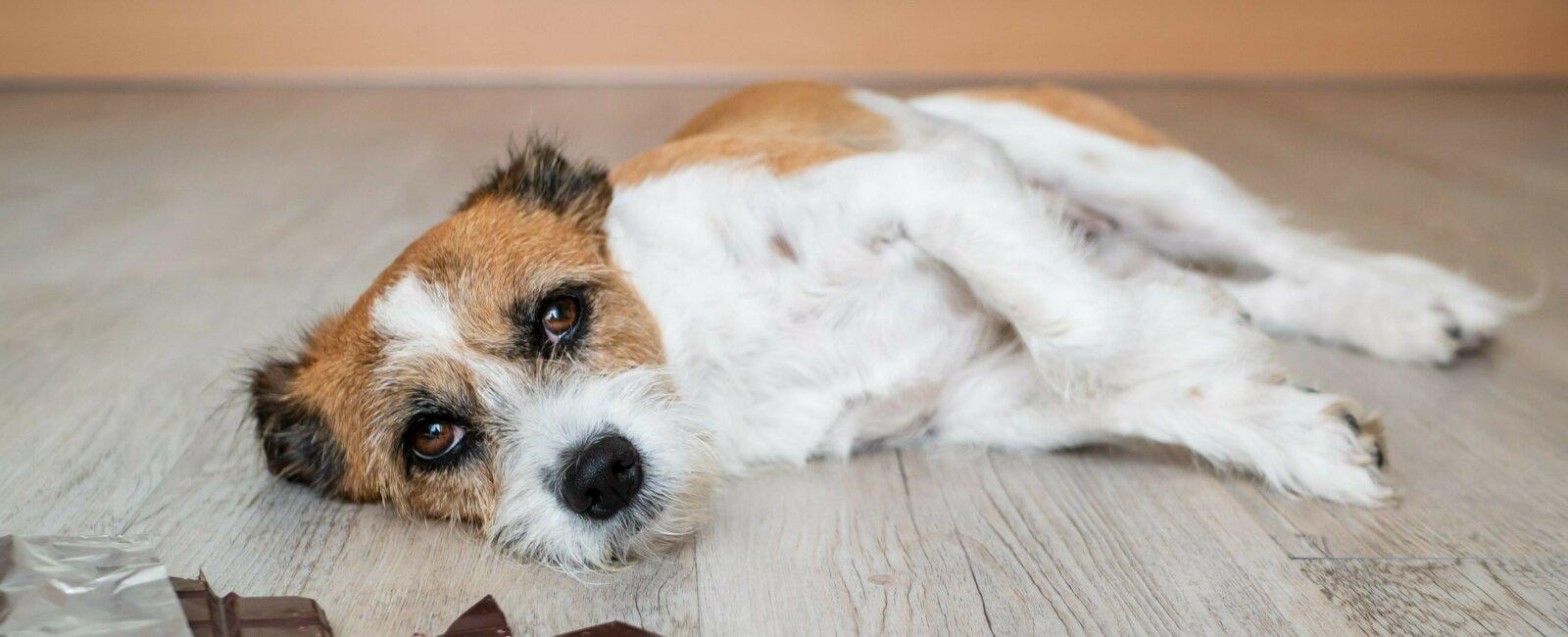 Vétérinaire de garde dimanche